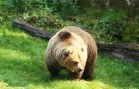 Historic Conservation Victory for Canada's Great Bear Rainforest