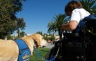 A Service Dog in Training at Disneyland Goes Viral