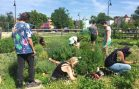 Nonprofit Spotlight: Common Good City Farm Strengthening Vital Relationship Between Environment and DC Community